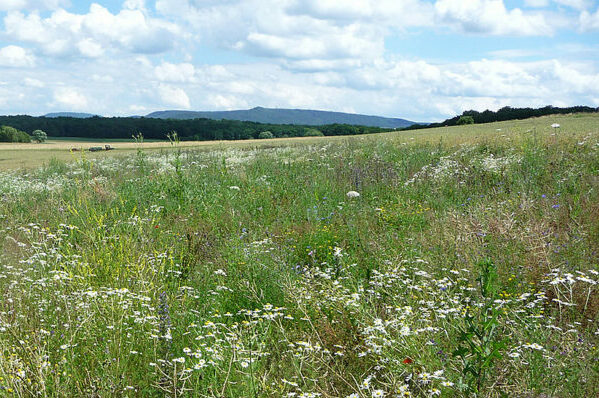 Optimally Promoting Biodiversity in Agricultural Landscapes