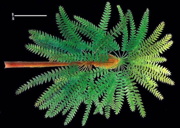 'Pompeii of prehistoric plants' unlocks evolutionary secret – study