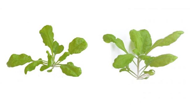 Shedding light on the long and the short of plant growth