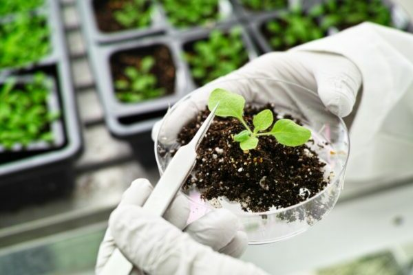Preventing the spread of plant pandemics