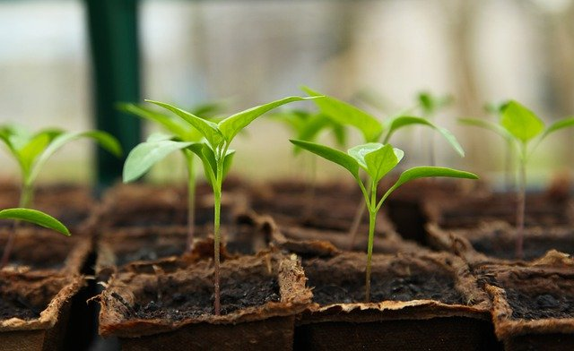 New insights into how phytochromes help plants sense and react to light, temperature