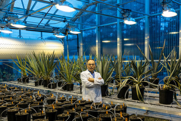 Single gene boosts climate resilience, yield and carbon capture in crops