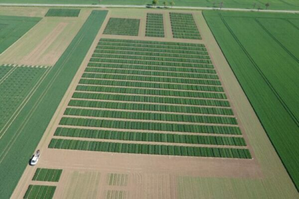 Big data: researchers double accuracy in predicting wheat yields
