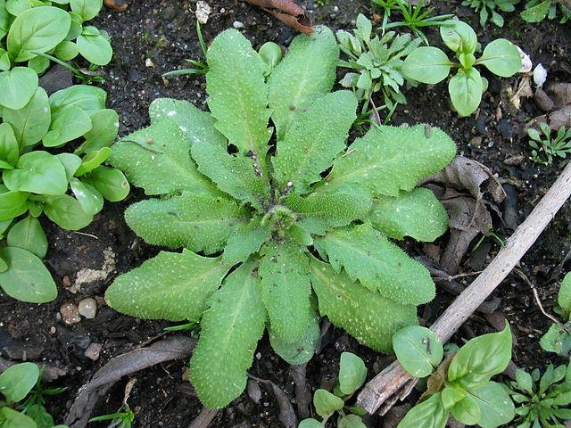 Plants use a blend of external influences to evolve defense mechanisms