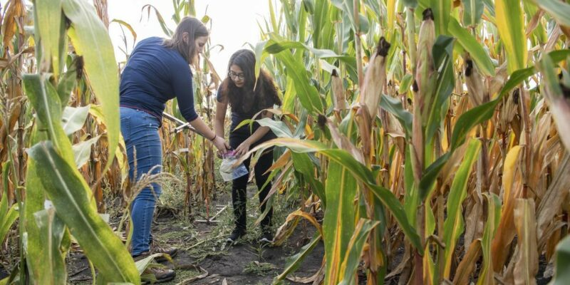 Improving soil health starts with farmer-researcher collaboration