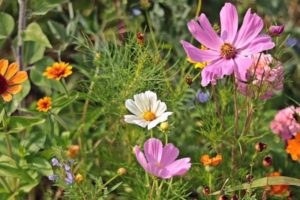 Plant diversity in grasslands: Multi-species swards outperform even in drought conditions