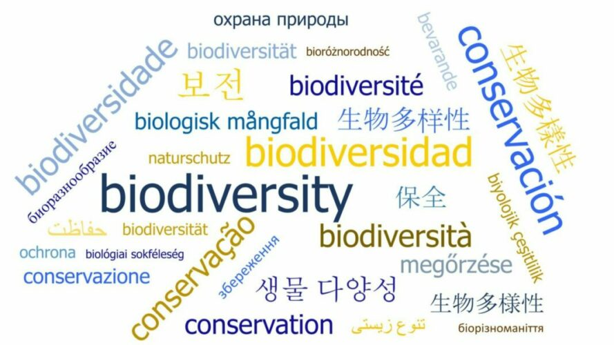 Non-English-language science could help save biodiversity
