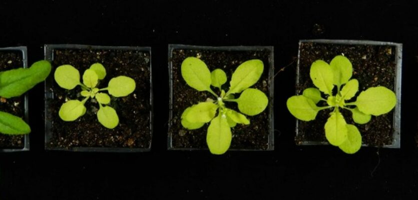 Climate change, population growth and stressed plants: Feeding the world in the 21st century